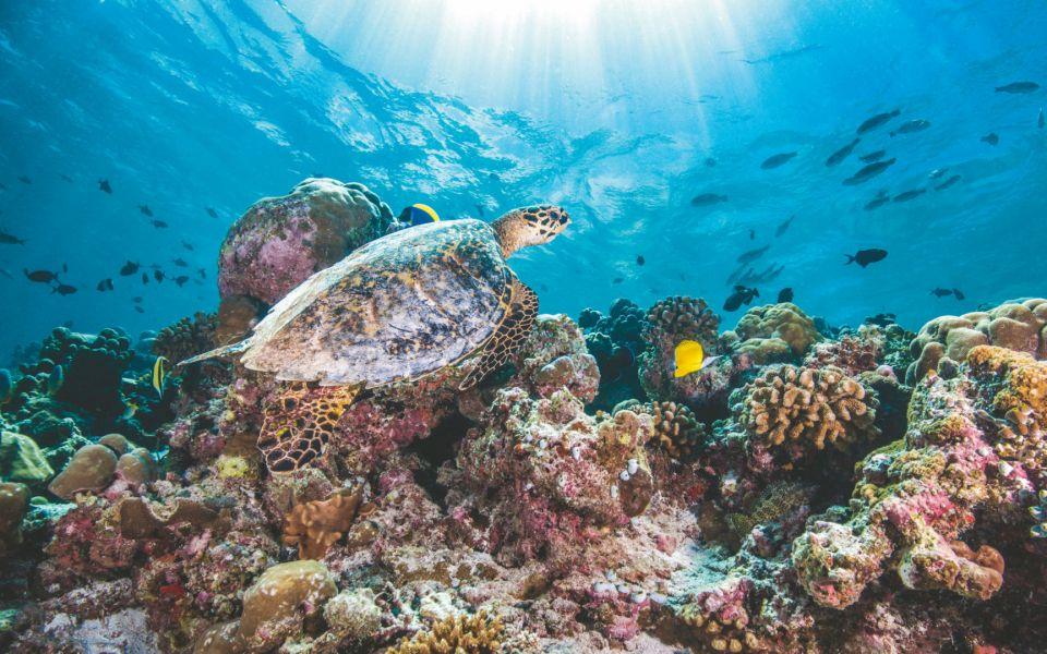 Oberoi House Reef - Egypt Tours Portal