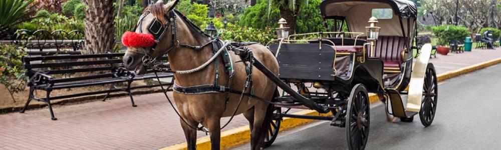Tour Itinerary:Aswan Horse Carriage Trip